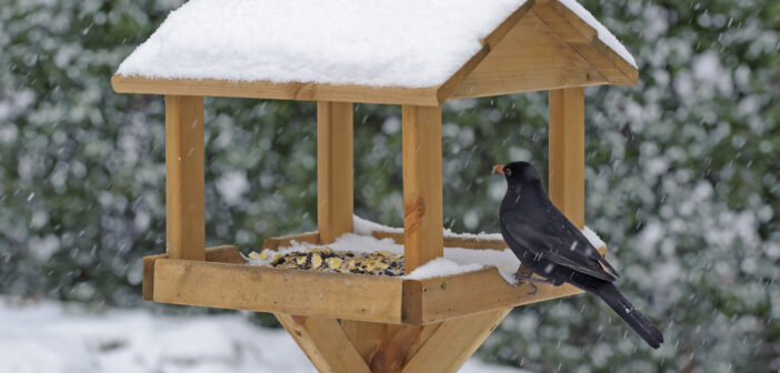 How to Put on a Festive Feast for Birds this Christmas