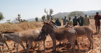 Motorbike-Powered Anti-Poaching Patrols in East Africa Clamping Down on Illegal Donkey Trafficking