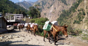 The Crucial but Hidden Role of Donkeys in Humanitarian Disasters